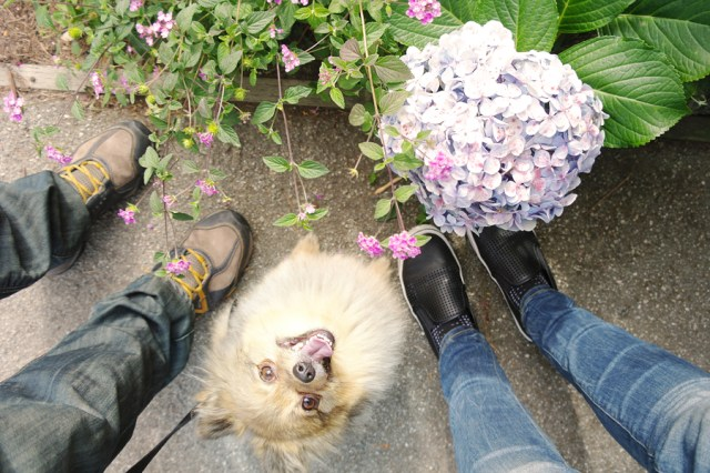 Feet-and-Alfie