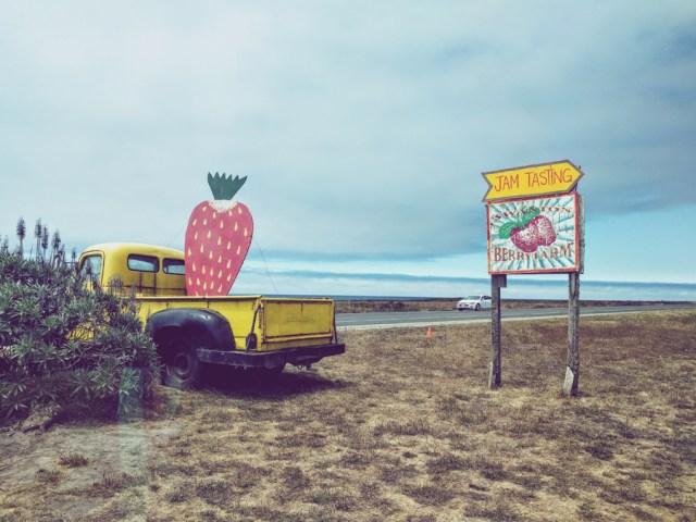swanson-berry-farm