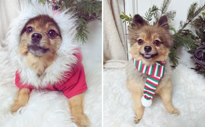 Alfie-Christmas-2016