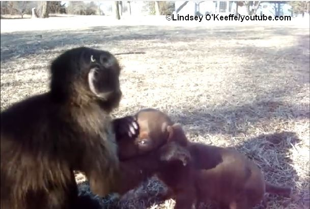 Baby_Affe_Baby_Hund_Lindesey_OKeeffe_youtube_COK