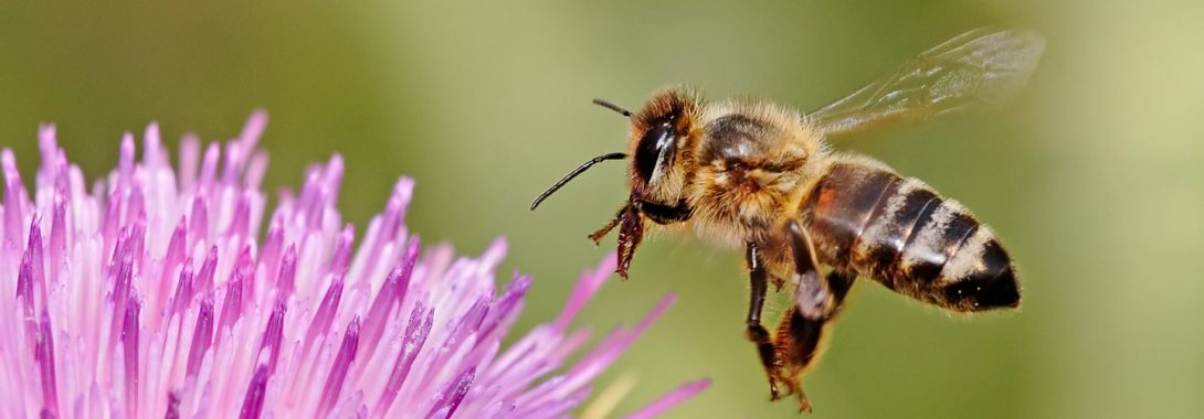 Bee Symbolism, Bee Meaning, Bee Totem, Bee Dream, Messages