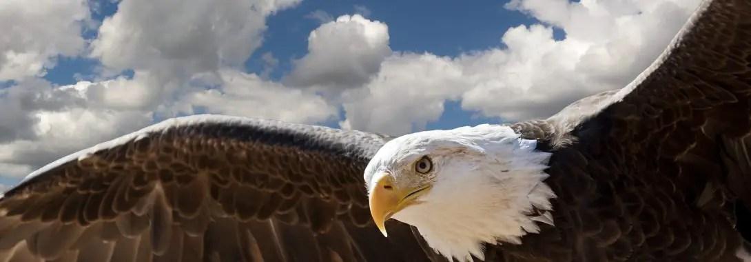 Eagle Symbolism, Eagle Meaning, Eagle Totem, Eagle Dream, Messages