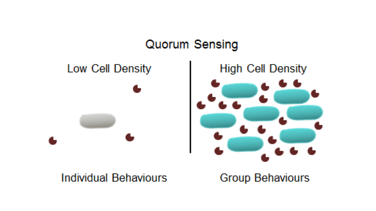 Fig. 2 Qorum sensing