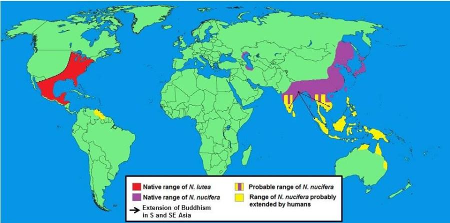 Distribution of Nelumbo