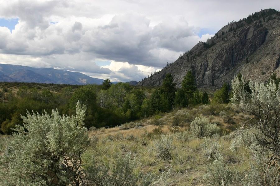 Sagebrush steepe