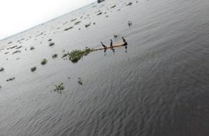 birds-backwaters-pics