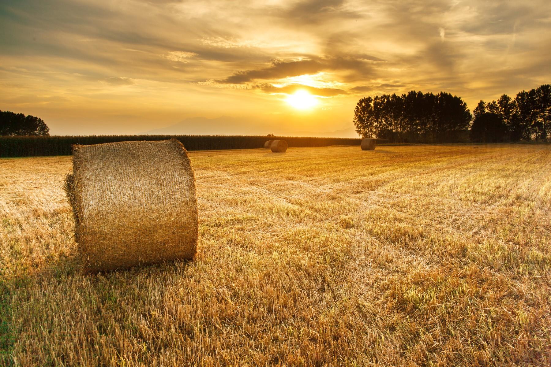 Free Fall Harvest Wallpaper June Landscape Splitshire