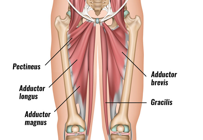 Groin Strain - Sportsinjuryclinicnet