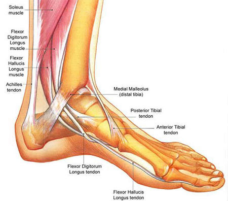 Top NYC Foot Pain Treatment Specialist · Pain Management Clinic in NYC