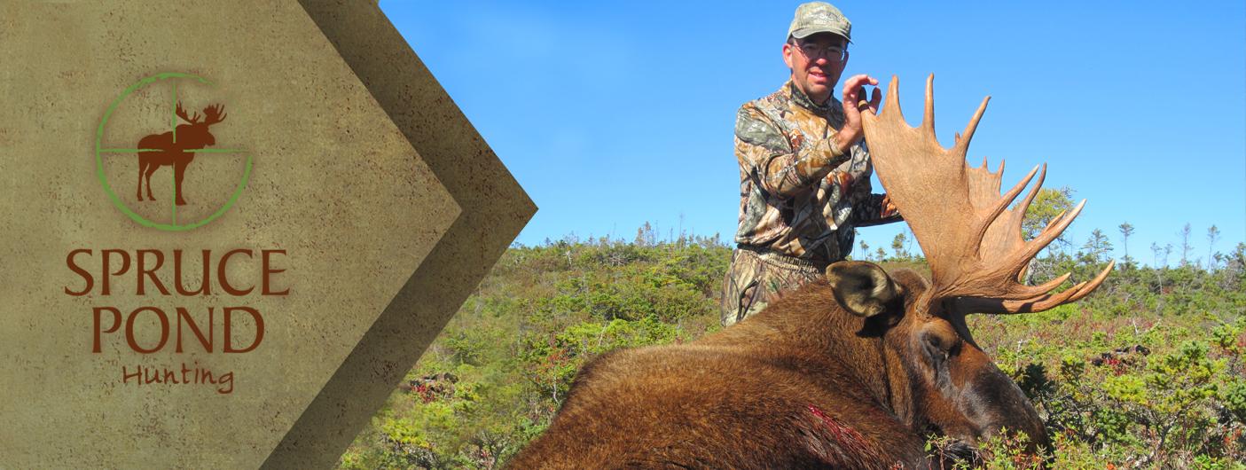 Image For Moose Hunting In Newfoundland Spruce Pond Hunting