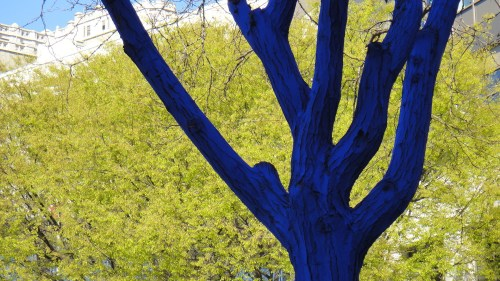 Blue Tree, Westlake Park, Seattle