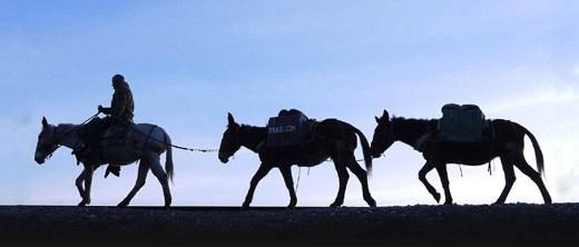 mule documentary