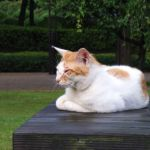 1024px-Cat_on_table