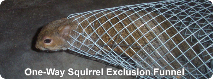 Squirrel Trapping Tips And Techniques