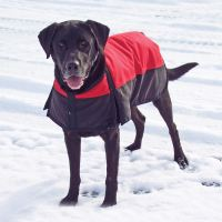 Dura-Tech Insulated Waterproof Dog Coat in Dog Coats ...