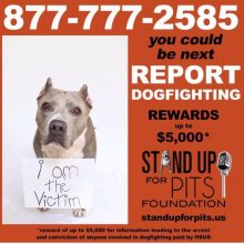 REPORT DOGFIGHTING. BE THEIR VOICE or YOU COULD BE NEXT.