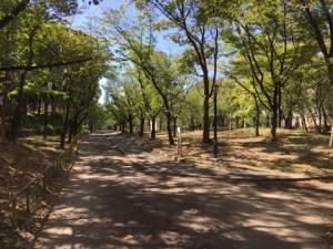 ポケモンGO「ゼニガメの巣」検証 毛馬桜ノ宮公園