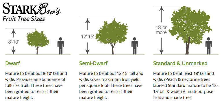Fruit Tree Sizes - Stark Bro\u0027s
