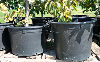 Growing Fruit Trees In Containers Part 1 Stark Bro39s
