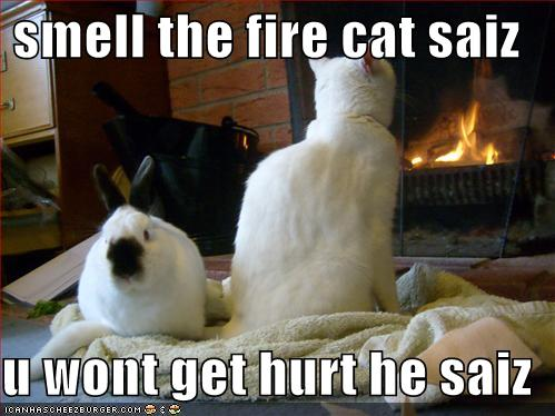 Never listen to a cat.