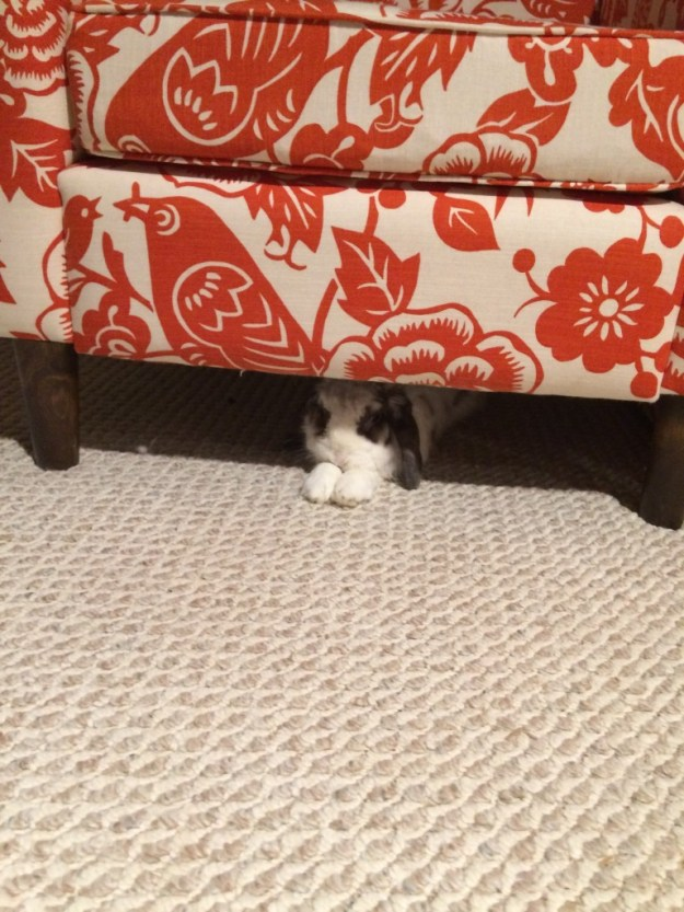 betsy underneath the chair
