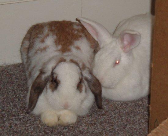 snuggling bunnies