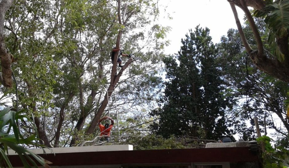 Tree men at work 1_sm