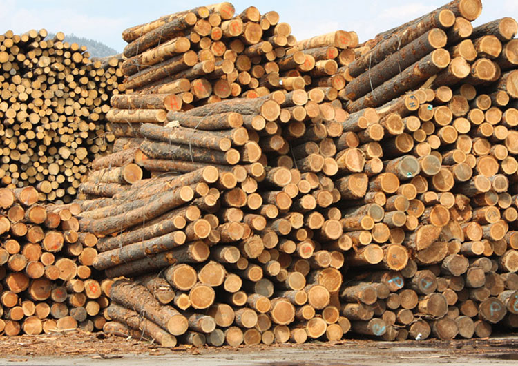 How to Start Wood Products Based Industry, Manufacturing Plant, Cost