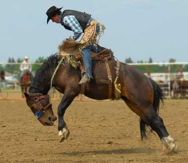 Fall Tree And Black Fence Wallpaper Texas State Sport Rodeo
