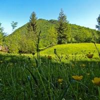 Brusnički vidikovci: Gorica, Čolpin Bor, Galinik (14 km)