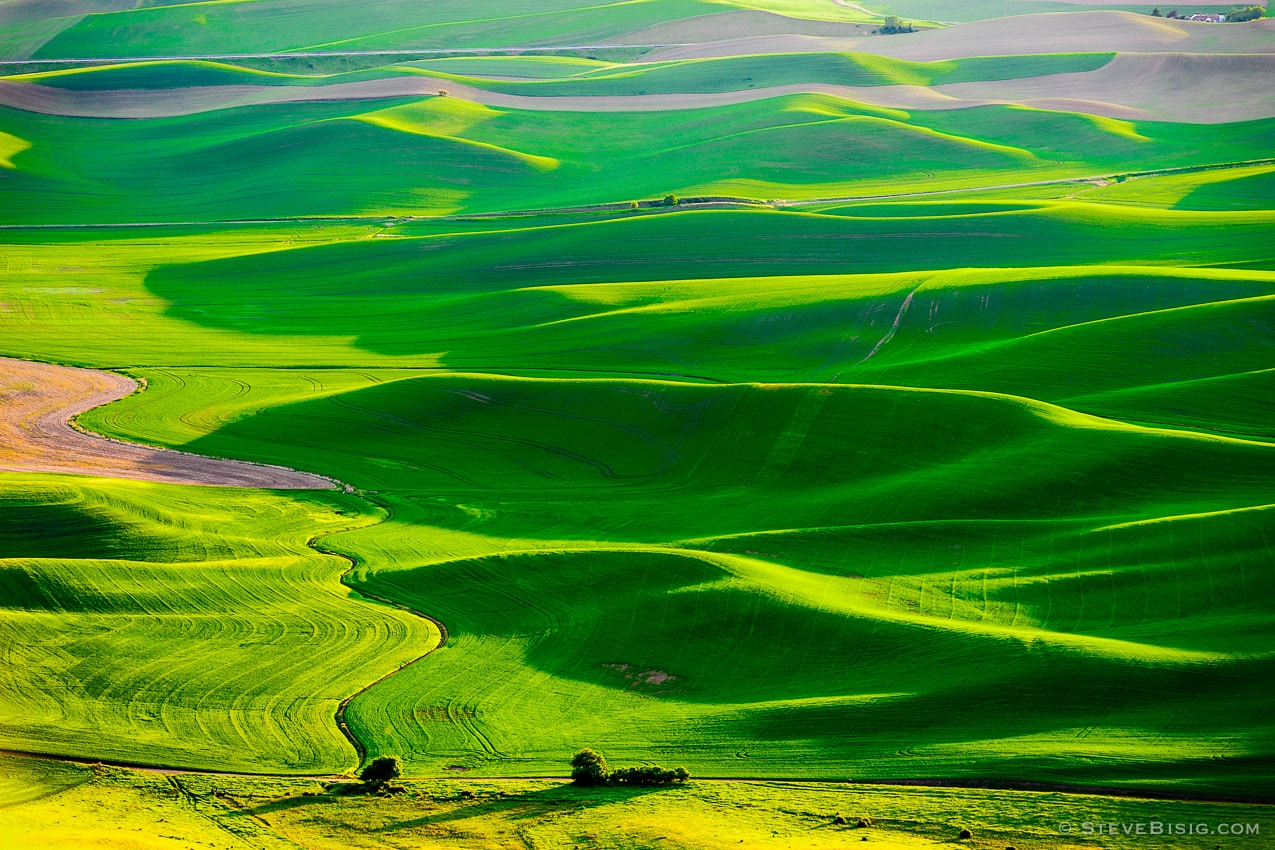Photography Project: Evening on the Palouse, Steptoe Butte, Washington, 2014