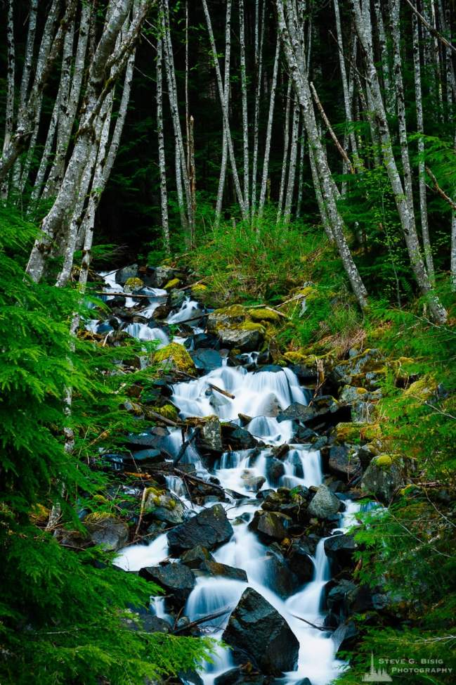 A photograph of an unknown name creek in the Snoqualmie River Valley in King County, Washington.