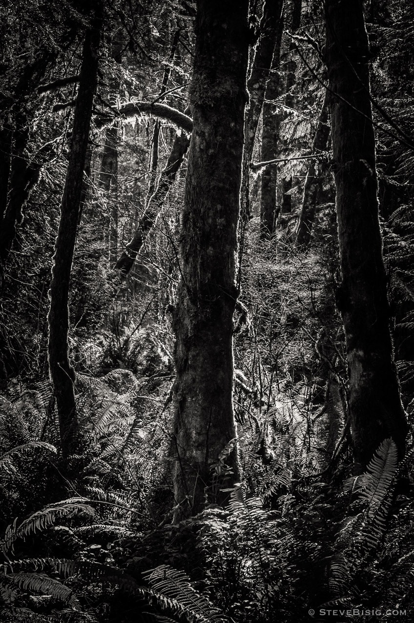 Lowland Winter Forest No. 11, Tiger Mountain, Washington, 2015
