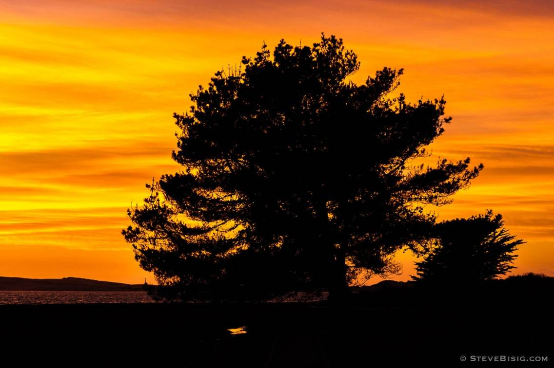 A photograph of a tree silhouetted against the Autumn evening skies at Morro Bay State Park, California.