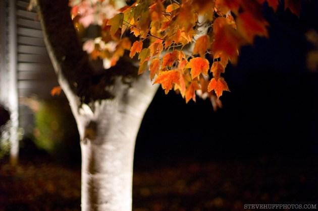 ISO 1250 at Night