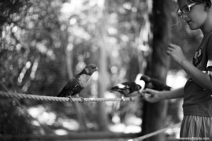 birdgirl