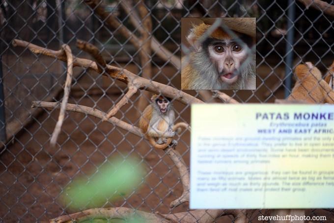 monkeycrop