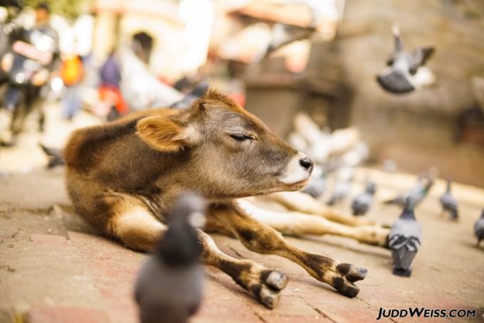 nepal-2015-1010