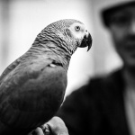 Lessons Learned - Using Classic Lenses on the Leica M Monochrom by Ashwin Rao