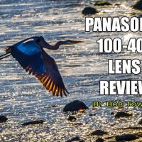 The Mighty Panasonic-Leica 100-400mm Lens Review by Bob Towery