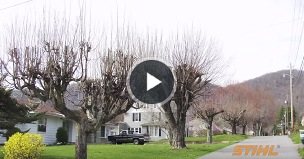Tree Topping Tips and Problems Video STIHL USA