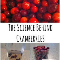 The Science Behind Cranberries