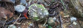 Hermit Crabs on St. John