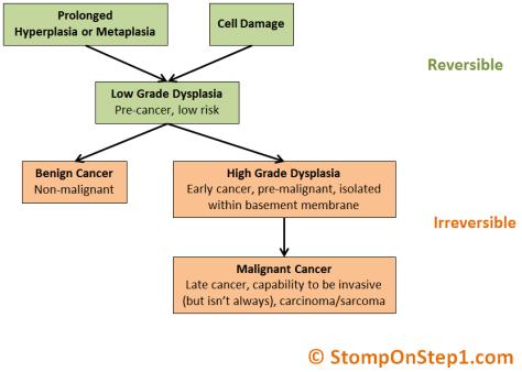 Benign vs. Malignant Dysplasia Pathway Cancer