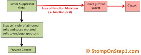 Tumor Suppressor Genes p53 RB Loss of function