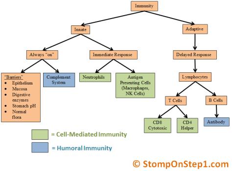 Innate Immunity vs. Adaptive Immune System, Humor vs. Cell-mediated