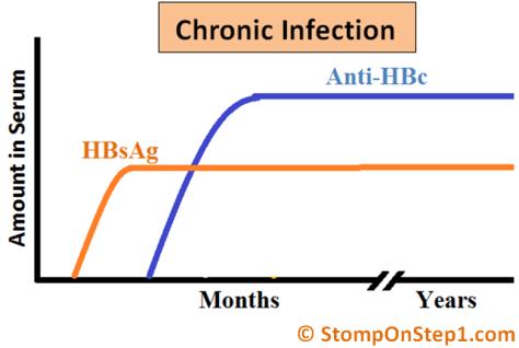 Hepatitis B Serology Chronic Infection HBsAg Anti HBs HBsAb