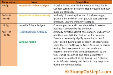 Hepatitis B Serology