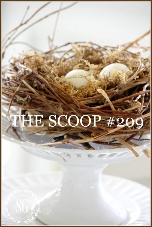 THE SCOOP #209