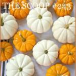 THE SCOOP #243